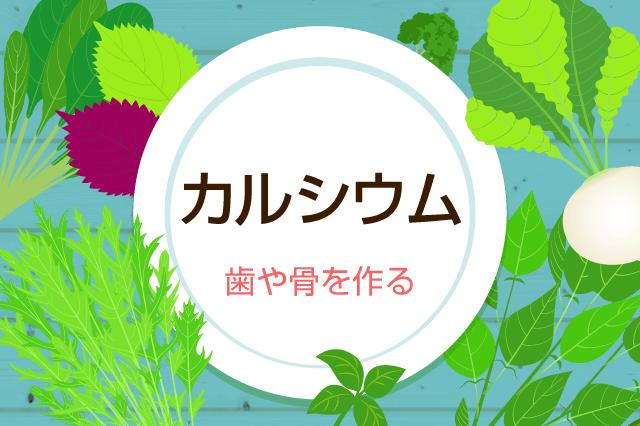 野菜からもカルシウムがとれる?!多い食品ランキングTop5&吸収率を高めるレシピ
