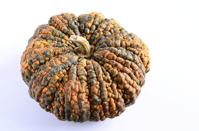ちりめんかぼちゃ