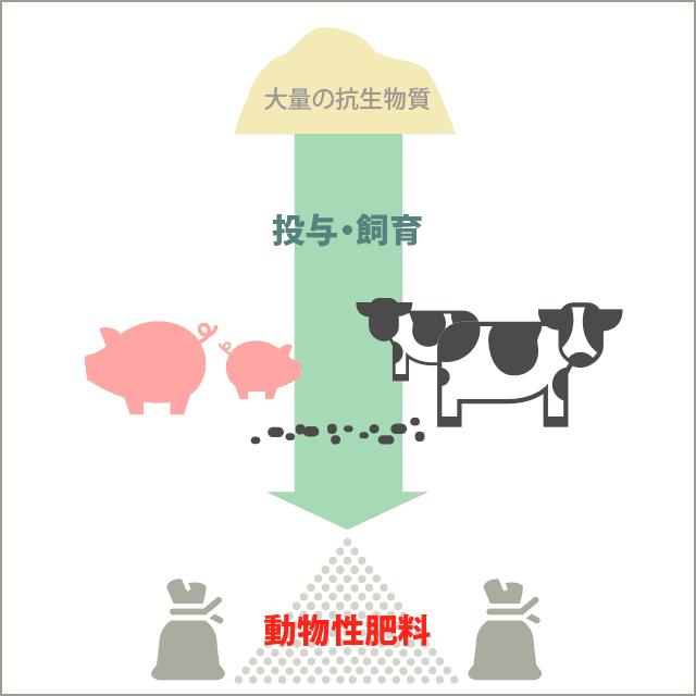 抗生物質を含む家畜の糞・動物性肥料