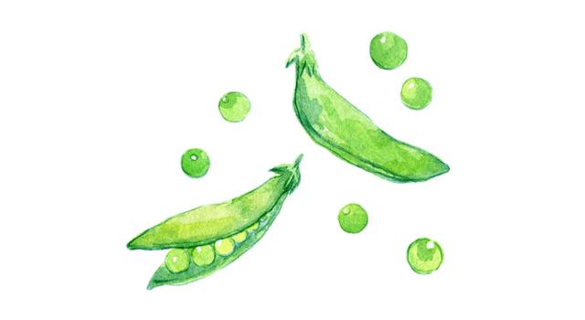 春が旬!さやえんどうとスナップエンドウ、グリーンピースの違いと下処理方法&簡単レシピ