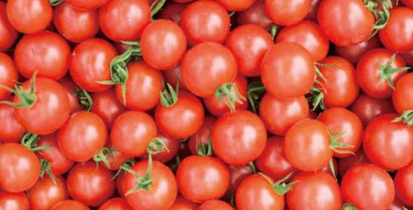 糖度は平均10度!Oisixで大評判の「みつトマト」が甘くて美味しい秘密とは?