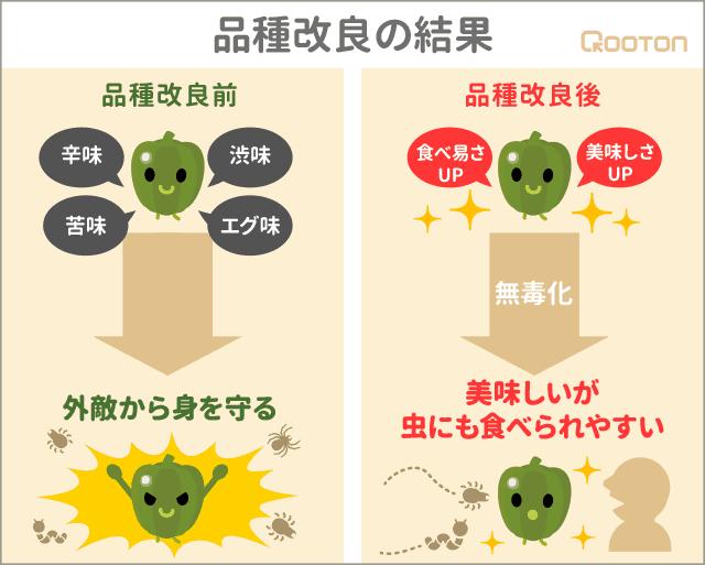 品種改良による野菜の無毒化