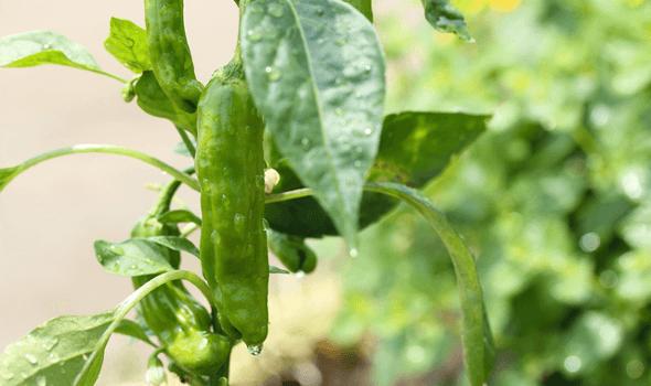 農薬の必要性