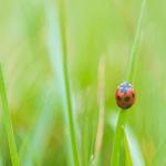 実はあの昆虫も農薬だった?農薬取締法に見る農薬の定義