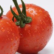 トマトランキング