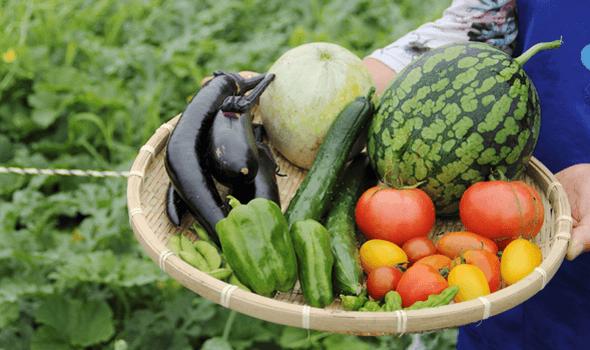 無農薬・減農薬野菜とは?