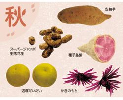 日本むかし野菜