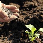 有機肥料の成分偽装は何が問題?化学肥料との違いとは